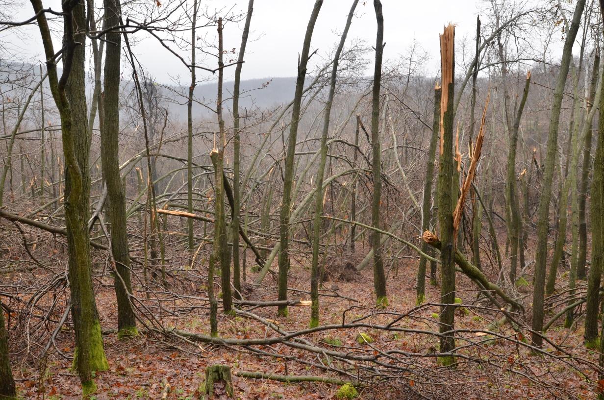 Súlyos erdőkár jégtörés következtében 2014 decemberében